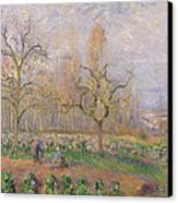 Orchard At Pontoise Canvas Print by Camille Pissarro