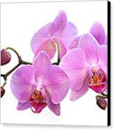 Orchid Flowers - Pink Canvas Print by Natalie Kinnear