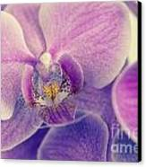 Orchid Lilac Dark Canvas Print by Hannes Cmarits