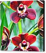 Orchid Rusty Canvas Print by Marty Koch