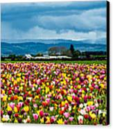 Oregon Tulip Farm - Willamette Valley Canvas Print by Gary Whitton