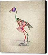 Osteology Of Birds Canvas Print by Aged Pixel