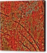 Otherworldy Light Traces Canvas Print by Michelle Wiarda
