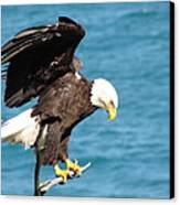 Our Finest American Bald Eagle Canvas Print by Mitch Spillane