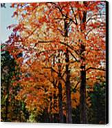 Over The Hill And Through The Trees Canvas Print by Jeff Folger