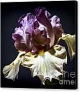 Painted Iris Canvas Print by Holly Martin