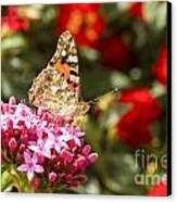 Painted Lady Butterfly Canvas Print by Eyal Bartov