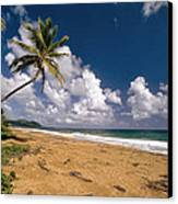 Palm Tree On Maunabo Beach Puerto Rico Canvas Print by George Oze