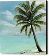 Palm Tree Study Canvas Print by Cecilia Brendel