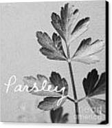 Parsley Canvas Print by Linda Woods