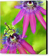 Passiflora Piresii Vine  - Passiflora Twins Canvas Print by Michelle Wiarda