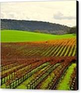 Pastoral Vineyards Of Asti Canvas Print by Antonia Citrino