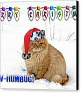 Paw Humbug Canvas Print by Robyn Stacey
