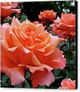 Peach Roses Canvas Print by Rona Black