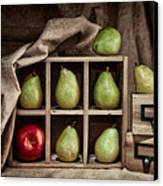 Pears On Display Still Life Canvas Print by Tom Mc Nemar