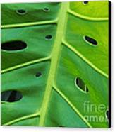 Peekaboo Leaf Canvas Print by Ann Horn