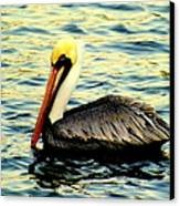 Pelican Waters Canvas Print by Karen Wiles