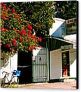 Pepes In Key West Florida Canvas Print by Susanne Van Hulst