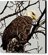 Perched On High Canvas Print by Thomas Young
