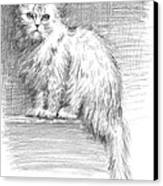 Persian Cat Canvas Print by Sarah Parks
