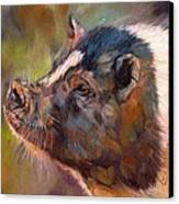 Pig Canvas Print by David Stribbling