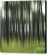 Pine Forest.blurred Canvas Print by Bernard Jaubert