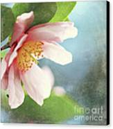 Pink Camellia Canvas Print by Sylvia Cook