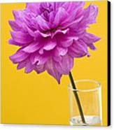 Pink Dahlia In A Vase Against Yellow Orange Background Canvas Print by Natalie Kinnear