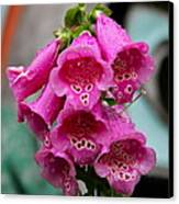 Pink Foxglove Canvas Print by Karon Melillo DeVega