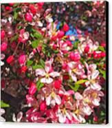 Pink Magnolia 2 Canvas Print by Joann Vitali