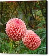 Pink Orange Dahlia Flowers Art Prints Gardens Canvas Print by Baslee Troutman