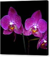 Pink Orchid  Canvas Print by Toppart Sweden