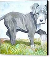 Pitbull Puppy Canvas Print by Martial Martin