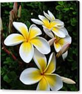 Plumeria In The Sunshine Canvas Print by Kaye Menner