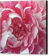 Plush Peony Canvas Print by Kathy Yates