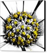 Pollen  Canvas Print by Steve Taylor
