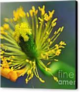 Poppy Seed Capsule 2 Canvas Print by Kaye Menner