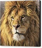 Portrait Of A Lion Canvas Print by Lucie Bilodeau