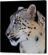 Portrait Of A Snow Leopard Canvas Print by John Absher