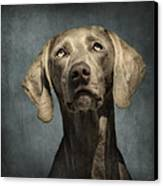 Portrait Of A Weimaraner Dog Canvas Print by Wolf Shadow  Photography