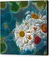 Pot Of Daisies 02 - S11bl01 Canvas Print by Variance Collections