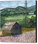 Potato Blossoms Canvas Print by Paula Robertson