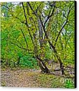 Poudre Trees-2 Canvas Print by Baywest Imaging