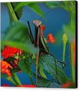 Praying Mantis Canvas Print by Raymond Salani III