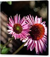 Pretty Flowers Canvas Print by Joe Fernandez