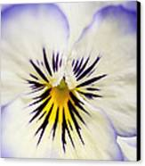Pretty Pansy Close Up Canvas Print by Natalie Kinnear
