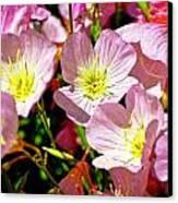 Pretty Purple Canvas Print by Marty Koch