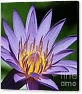 Pretty Purple Petals Canvas Print by Sabrina L Ryan