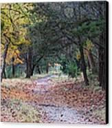 Primrose Path Ramble Canvas Print by Wendy J St Christopher