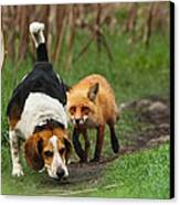 Probably The World's Worst Hunting Dog Canvas Print by Mircea Costina Photography